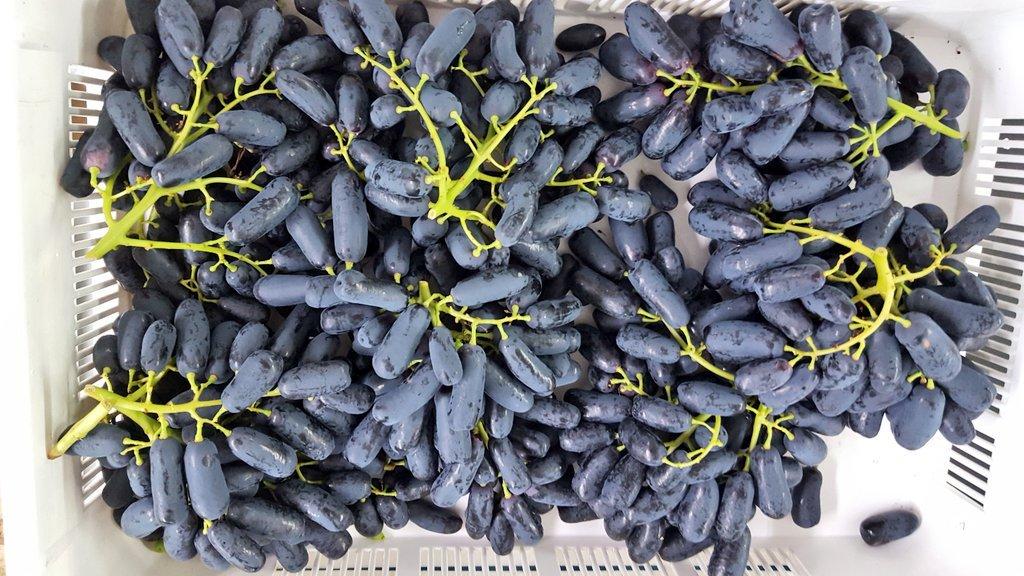 Black Seedless Grapes Moon Drops Black Seedl...